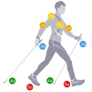 Die 5 Bereiche der Nordic Walking-Technik
