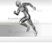Muskelguide