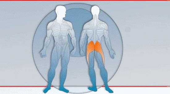Muskeln Po und Gesäß