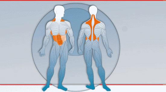 Muskeln Rumpf und Bauch